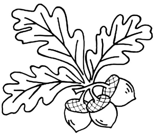 Листочки деревьев. Шаблоны для вырезания, аппликаций. Осенние поделки из бумаги, фетра