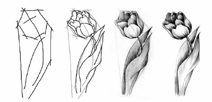 Уроки рисования для начинающих с нуля карандашом поэтапно. Инструкции