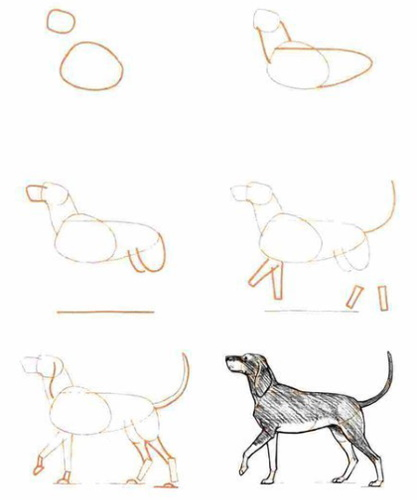 Наброски карандашом для начинающих: предметы, животные, люди, цветы. Как делать правильно