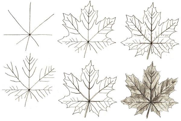Осенние рисунки карандашом: букет, лес, листья, пейзаж, листопад поэтапно для детей