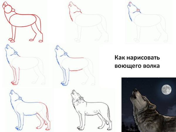 Рисунки волка карандашом поэтапно для срисовки для детей