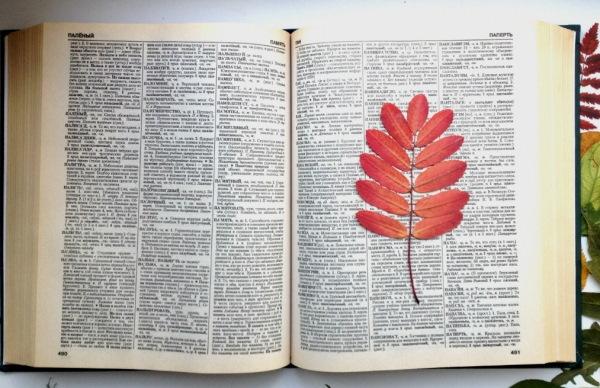 Поделки из засушенных листьев, цветов для детей начальной школы
