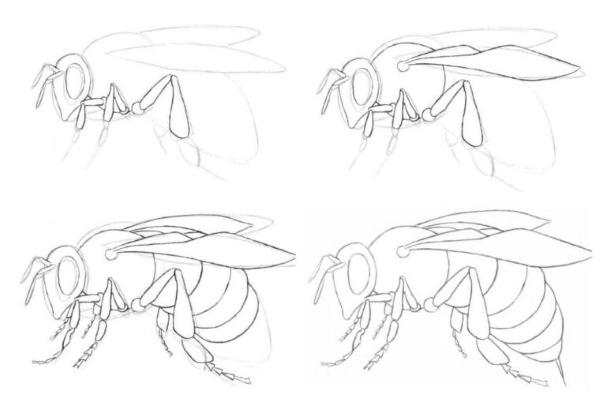 Пчелиные соты. Рисунок графический карандашом, трафареты для начинающих