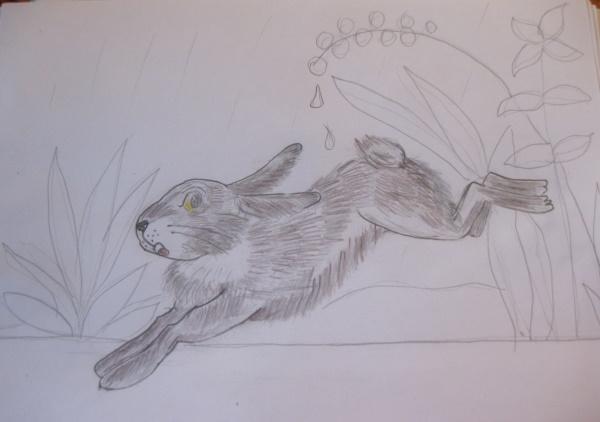 Заяц - рисунки для детей карандашом простые, цветные, поэтапно для срисовки
