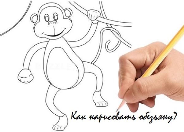 Обезьяна рисунок для детей карандашом простой, черно-белый, цветной, раскраска