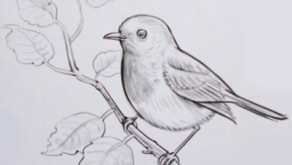 Рисунок воробья для детей карандашом, раскраска на ветке, дереве с кормушкой, хлебом, цветком