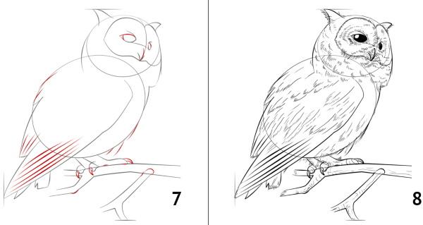 Сова. Рисунки карандашом для детей для срисовки с книгой, крыльями на ветке, дереве, камне
