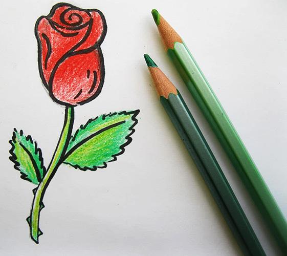 Как нарисовать розу карандашом поэтапно для начинающих красиво. Фото