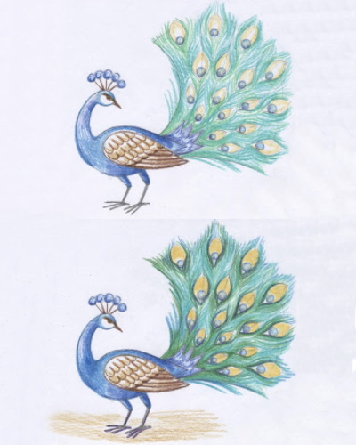 Рисунок павлина для детей поэтапно красками, карандашом, акварелью