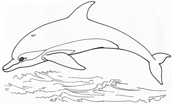 Дельфин рисунок для детей: простой поэтапно, легкий для срисовки