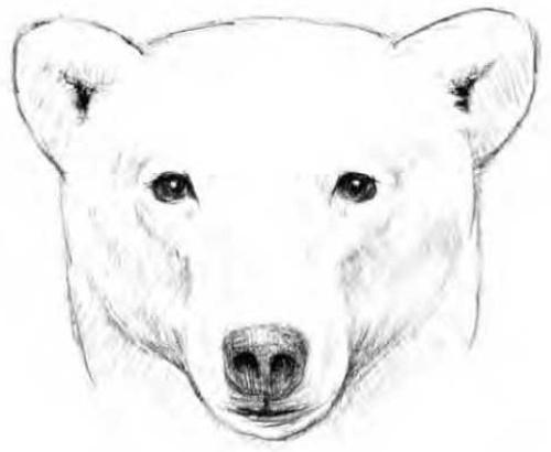Белый медведь рисунок для детей карандашом, гуашью, красками