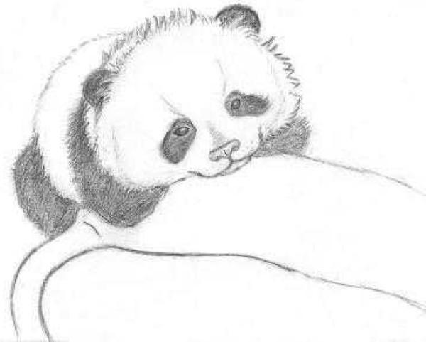 Панда рисунок для детей карандашом, красками, легкий для срисовки