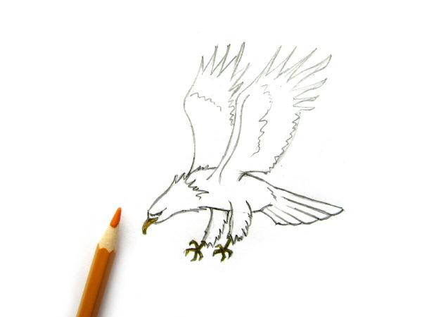 Орел рисунок для детей для срисовки поэтапно